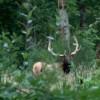 Elk Scouting Trip