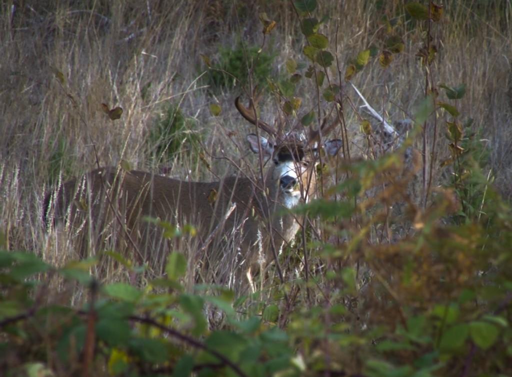 Revert Buck